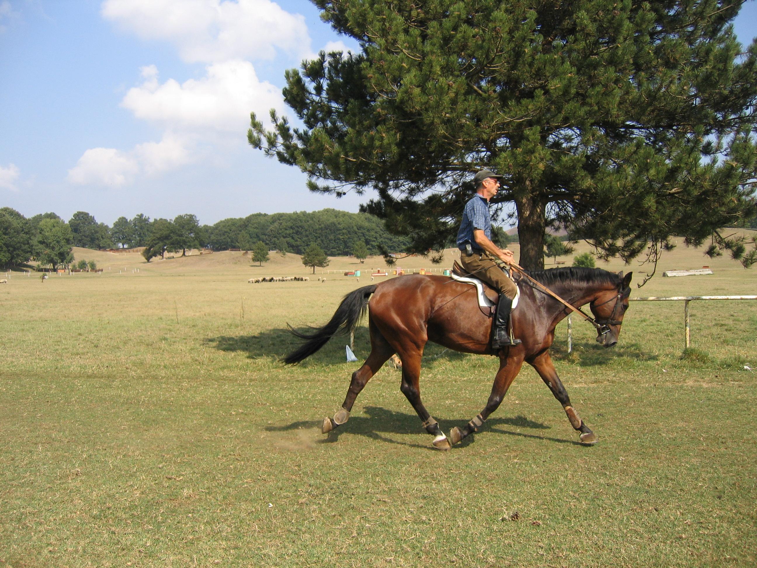 Riflessioni ed esperienze sull addestramento del cavallo - Avere un cavallo ...