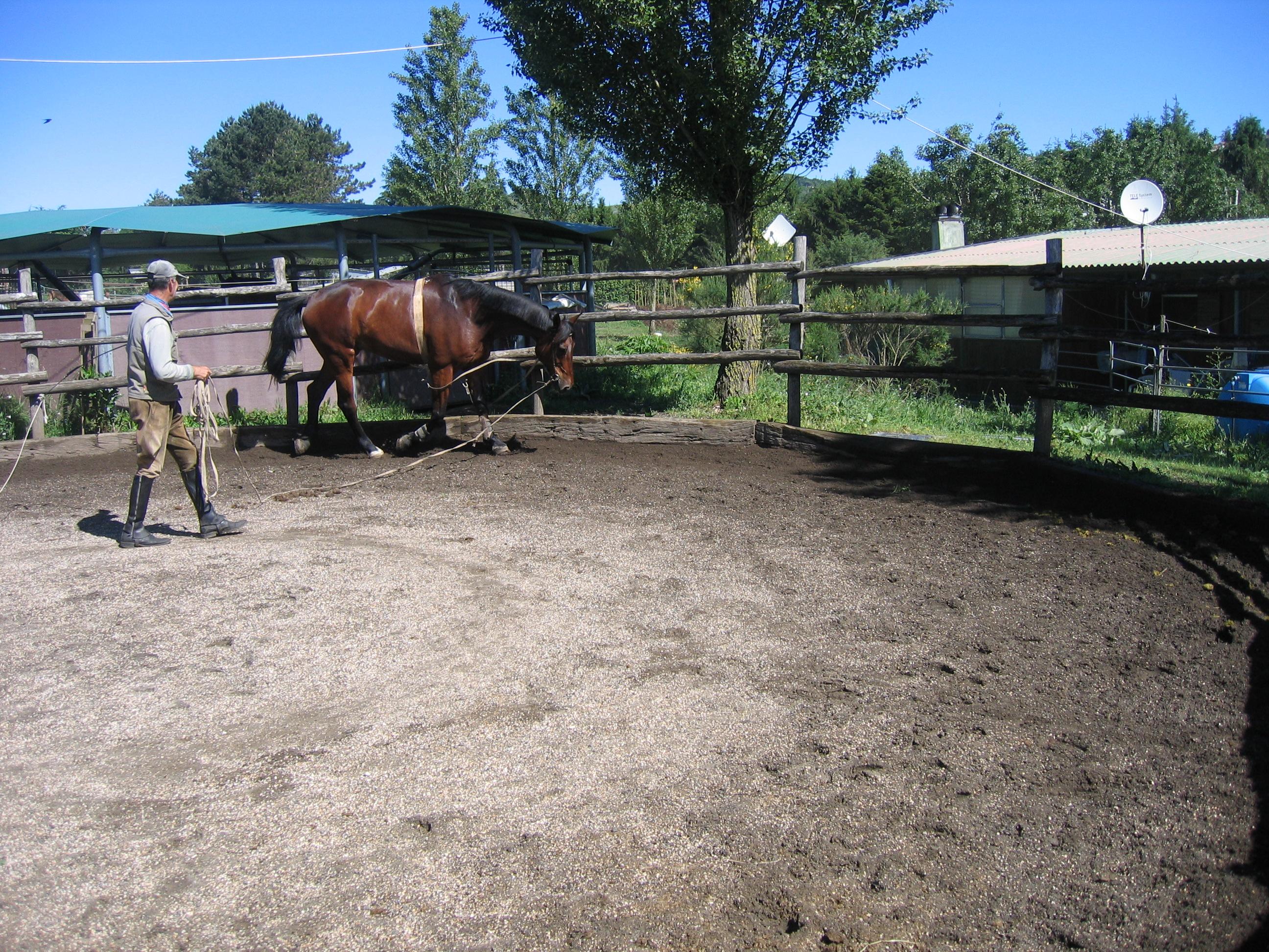 Tondino Per Cavalli.Costruzione Di Un Tondino La Striglia
