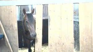 cavallo felice